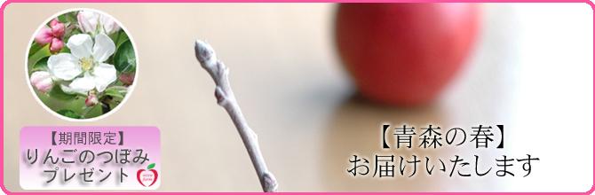 【りんごのつぼみ】プレゼント♪
