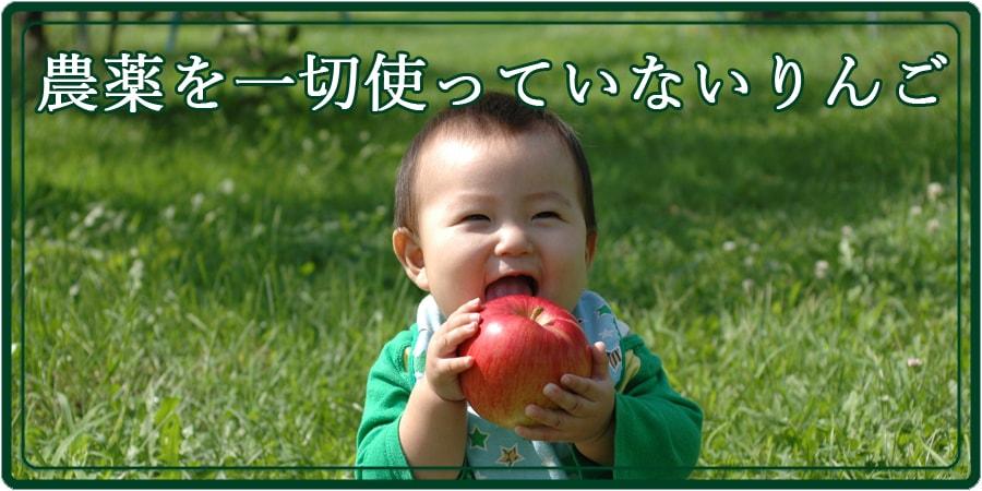 農薬を一切使ってません。見た目はわるいですが自然なリンゴです。